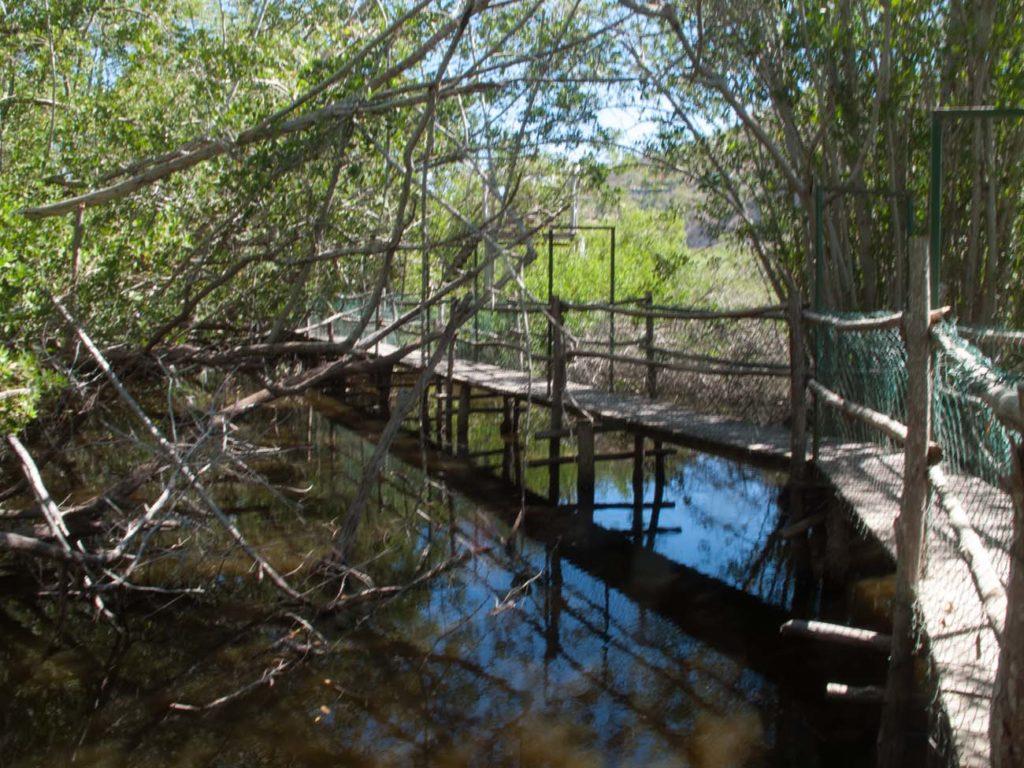 Bridges over the crocodile haven
