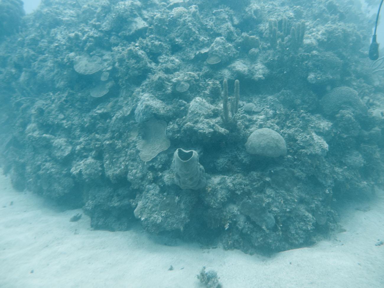 diving-044845