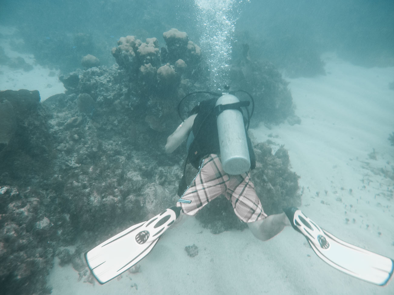Exploring Reef