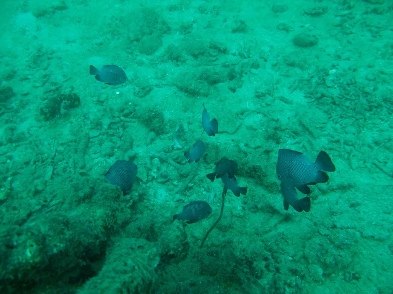 diving-nhatrang (110)