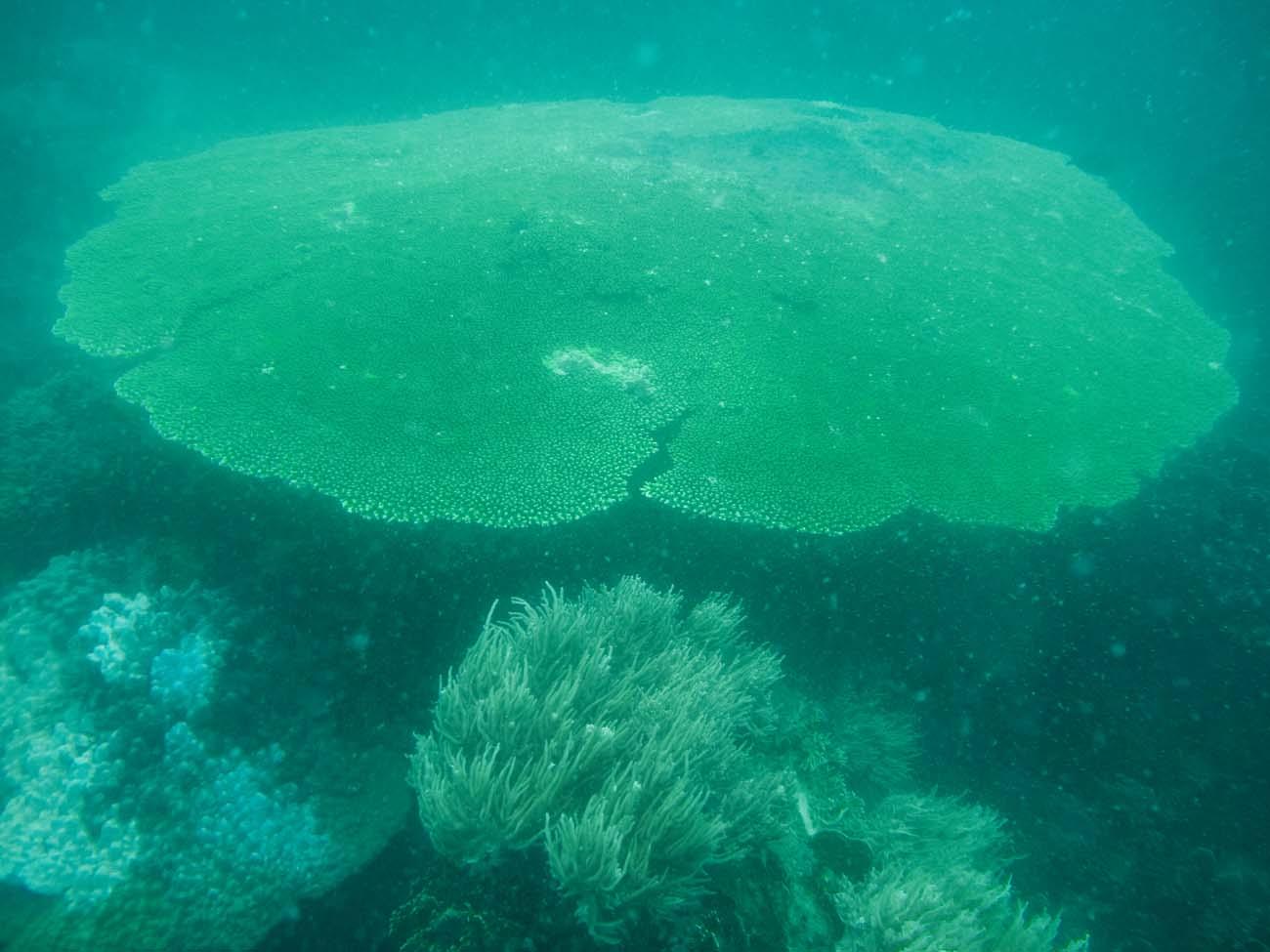 diving-nhatrang (68)