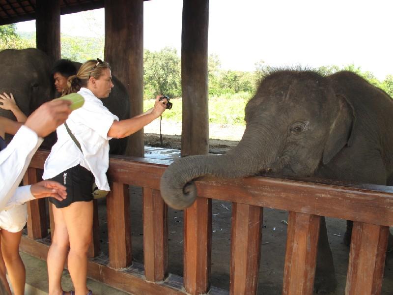 Elephant-park (12)