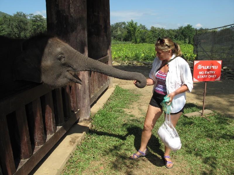 Elephant-park (7)