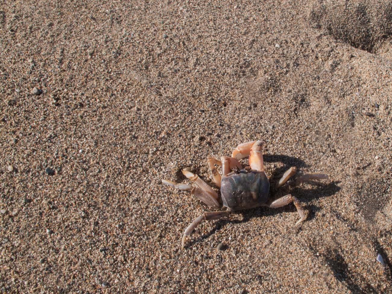 Beach-Playa-Grande-Condo-1537