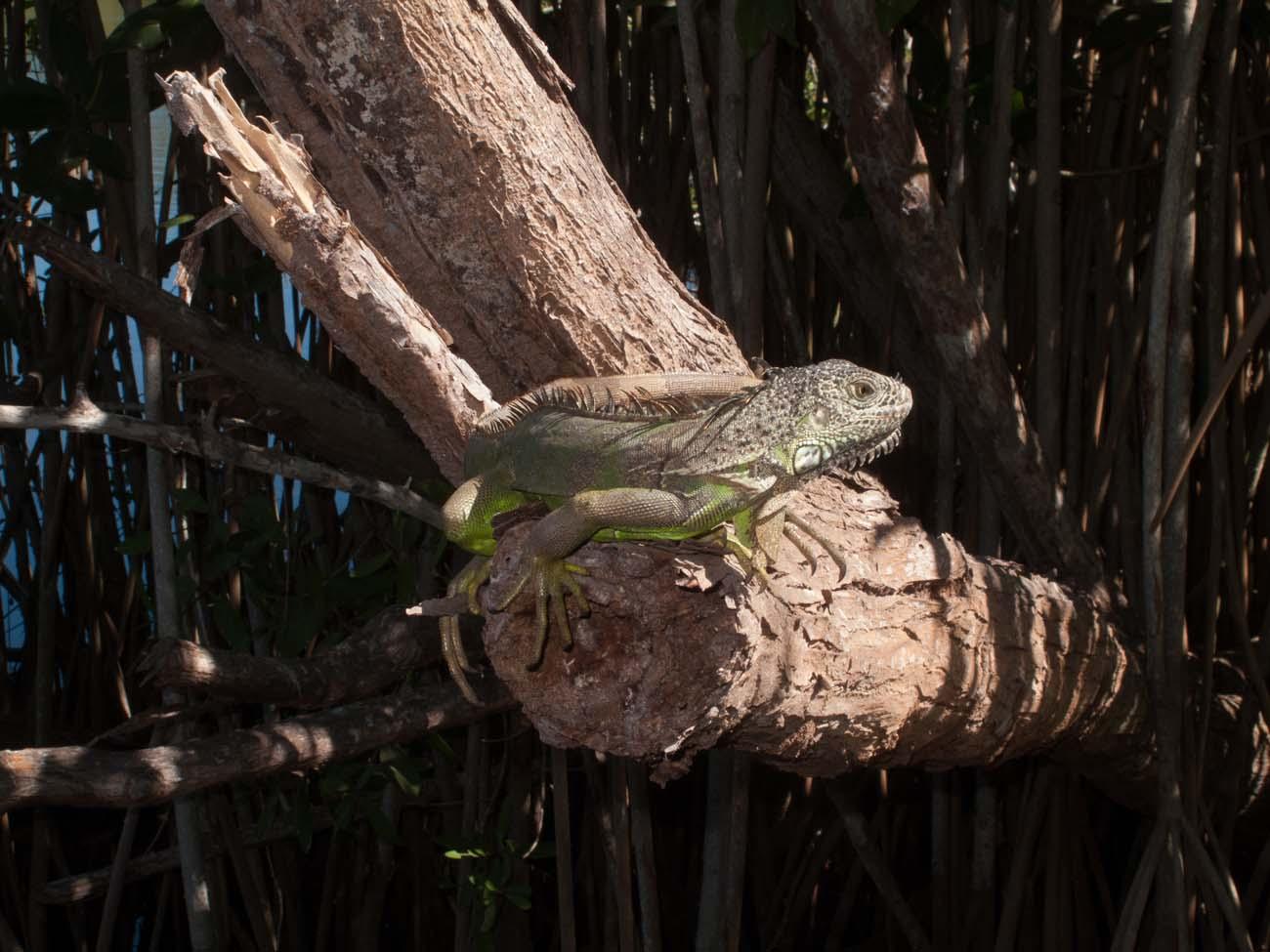 Crocodiles-1213