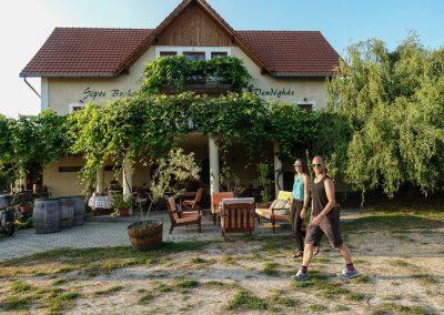 Sipos Borhaz Wine Pairing