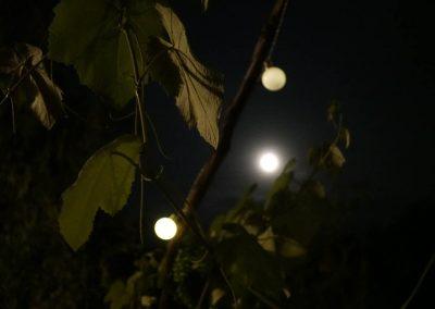 Night shot moon